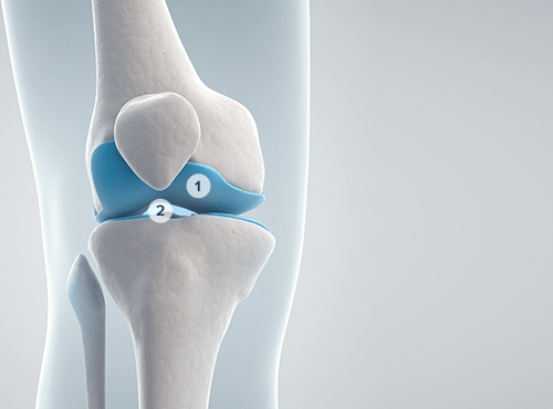 Inner view of a healthy knee joint